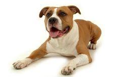 odeur de chien mouille odhlotion supprime l 39 odeur de chien mouill. Black Bedroom Furniture Sets. Home Design Ideas